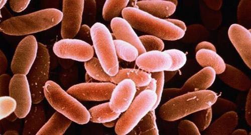 Trực khuẩn uốn ván