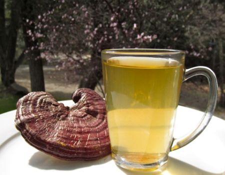 Uống nước nấm linh chi giúp ngăn ngừa bệnh tiểu đường hiệu quả