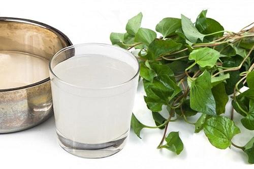 Hỗ hợp rau diếp cá và nước vo gạo chữa viêm đường hô hấp hiệu quả