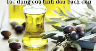Tác dụng của tinh dầu bạch đàn với sức khỏe và làm đẹp
