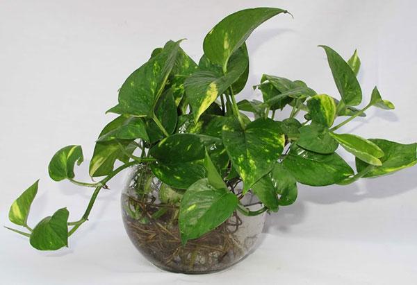 Thầy thuốc tư vấn 7 loại cây trồng trong nhà giúp lọc không khí, tốt cho sức khỏe