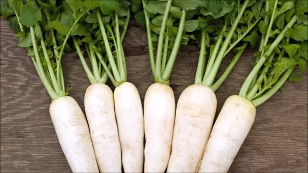 Công dụng trị bệnh của củ cải trắng trong y học cổ truyền