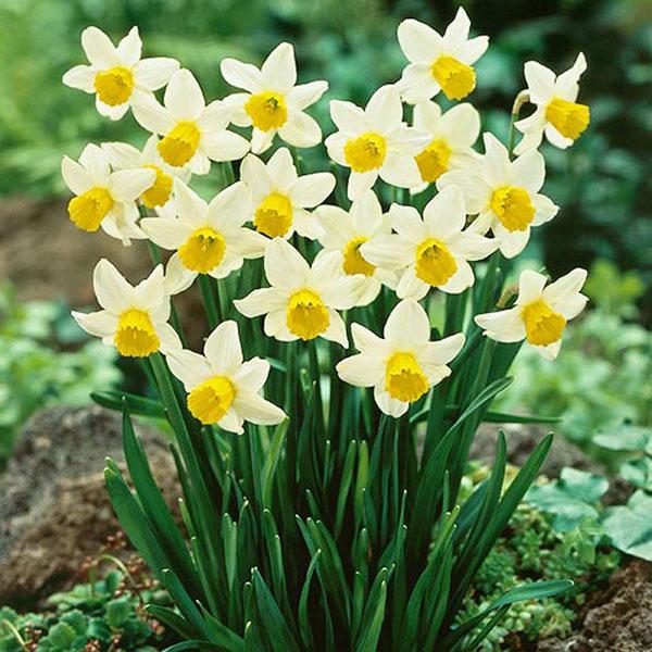 6 loại hoa chơi Tết cực độc cần thận trọng