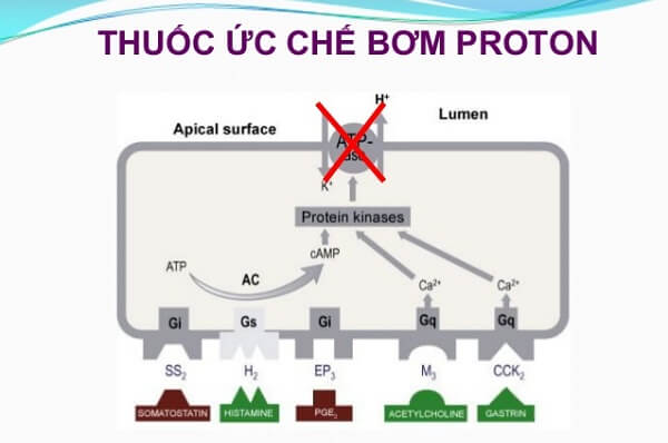Thuốc ức chế bơm proton là thuốc gì và có tác dụng phụ gì?